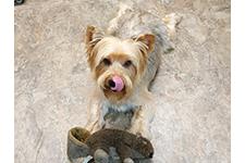 pensacola small dog grooming